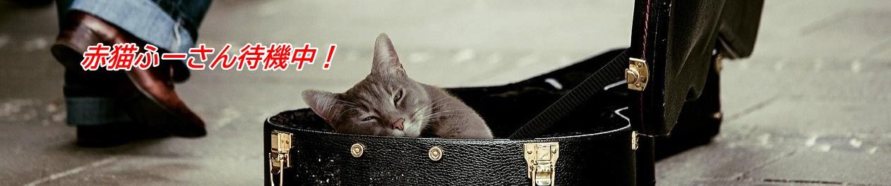 赤猫ふーさん待機中!